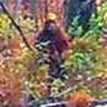 Mid-Maine Sasquatch or Injun Devil. Photo of a squatch in Maine.