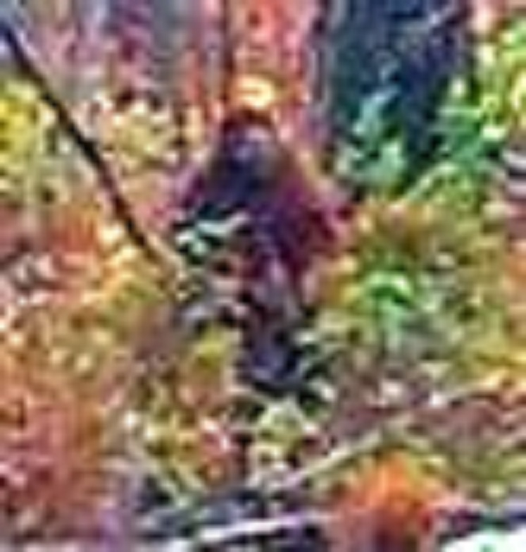 montana road map with Sasquatch Sightings Pomoola Mt Katahdin Maine on Stone Church browning in addition Mt Sunday E3 furthermore 2016 07 Glacier National Park as well Sasquatch Sightings Pomoola Mt Katahdin Maine further Northern Pacific Railway.