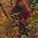 Pomoola zoomed photograph.  Do you think it is a squatch?