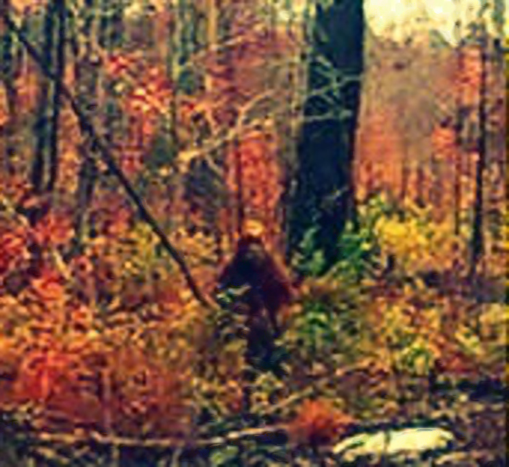Is this bigfoot in Maine?