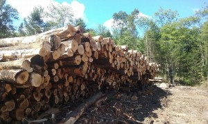 Maine Forestry Products.