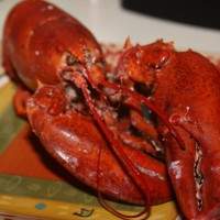 """Need the perfect gift? Send a Lobster Gram--featured in """"Every Day with Rachael Ray"""" and Oprah's"""