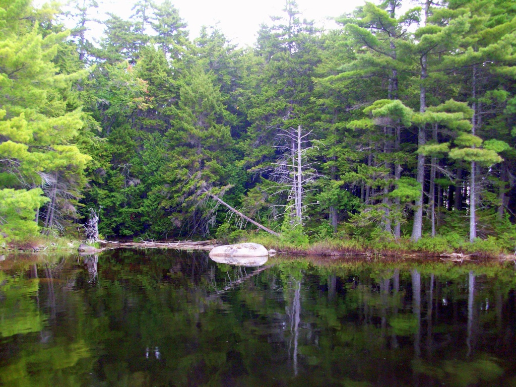 Shoreline in the Pemadumcook Chain of Lakes in Maine.