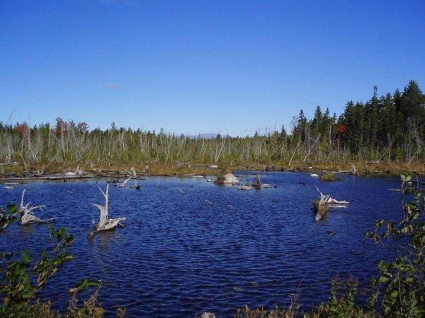 Photo of a distant Mt Katahdin across a beautiful Maine pond.